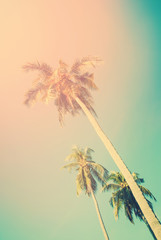 Palm trees in sun light on blue sky. For Holiday travel design