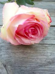 Zarte rosefarbene einzelne Rose auf einem Holztisch