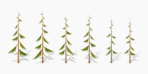 Shabby pine trees. 3D lowpoly isometric vector illustration. The set of objects isolated against the white background and shown from different sides