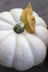 Mini white pumpkin close up with leaf