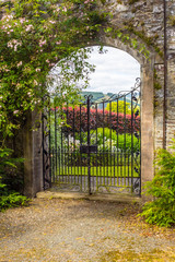 Beautiful, old garden gate with ivy and climbing roses