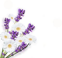 Gerber Daisy, and lavender isolated on white background