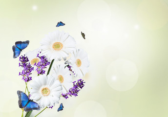 Gerber Daisy, lavender and butterfly isolated on green background