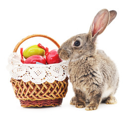 Easter Bunny with colored eggs.