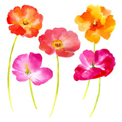 Watercolor illustration  flowers on a white background.