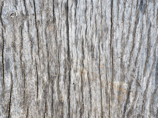 old wood of tree texture