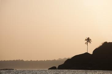 palms silhouette