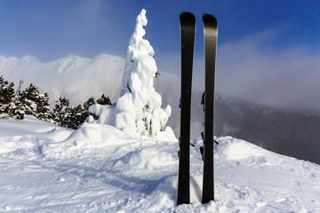 mountain ski on frozen pine tree background
