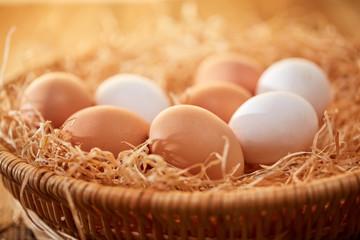 Nest mit frischen Eiern im Sonnenlicht
