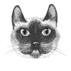 hand drawn portrait of siamese cat