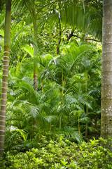 Lush green jungle background