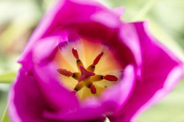 Inside Pink Flower