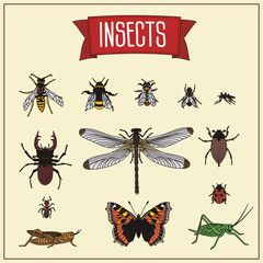 set isolated insects