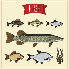 set isolated fish