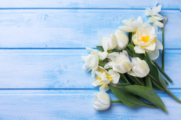 Spring white tulips flowers  on blue  painted wooden background.