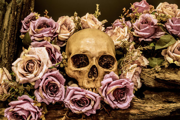 still life human skull with roses background
