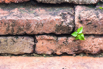 little plant based on niche of the old brick