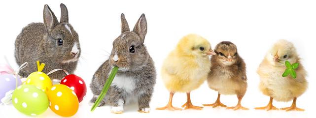 spring animals