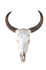 Bull Skull isolated on white background