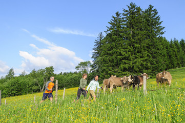 Fototapete - Nordic Walking inmitten grüner und blühender Wiesen