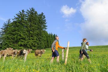 Fototapete - Workout beim walken zwischen weidenden Kühen