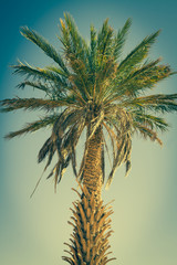 Palm tree in Erg Chebbi, at the western edge of the Sahara Deser