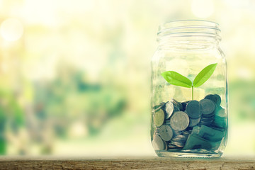 Growing plant on coin money in the bottle for money concept