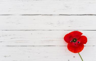 Rote Mohn Blume Schenken