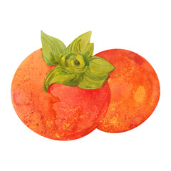 two watercolor persimmons