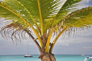 Isla Saona - Dominican Republic photography.
