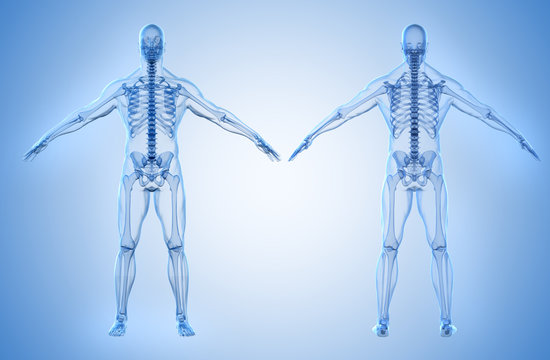 3d render of human body and skeleton