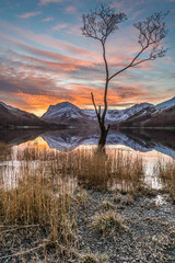 Beautiful orange winter sunrise at Buttermere in the Lake District, UK. The image features a lone tree in the right foreground with Fleetwith Pike in the background, capped in snow.