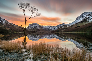 Vibrant orange sunrise with moving clouds and snowcapped mountains reflecting in calm still water with lonely tree in foreground at Buttermere, Lake District, UK. Wall mural