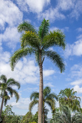 An image nice palm trees in the blue sky