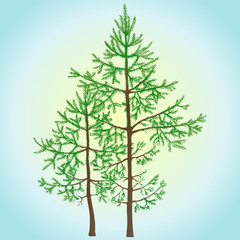 Young green fir trees. Realistic vector illustration.