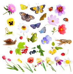 Collage of flowers, insects and animals.