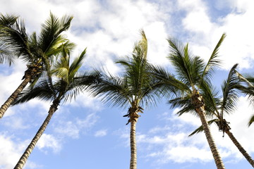 Palm trees against partly cloudy sky