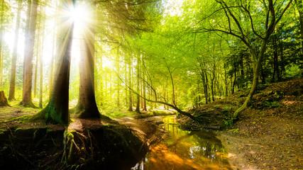 Wald mit Bach und Sonne