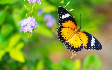 Butterfly in park.