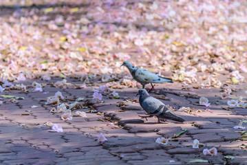 Cute pigeon on floor with flower in garden.