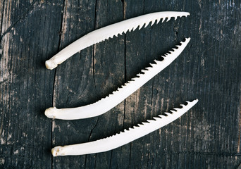 Bones fin carp