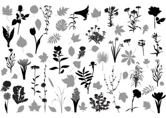 Collection of 32 various silhouettes of flowers and 34 various silhouettes of leaves