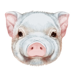 Portrait of Piggy. Hand drawn illustration.