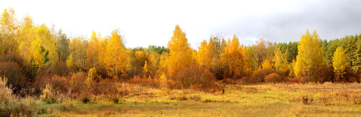 Blue sky and vibrant autumn yellow thickets.