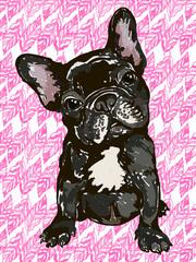 Illustration of the dog breed French bulldog