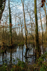 Secret Woodland Pond
