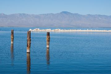 Posts in water at Salton Sea
