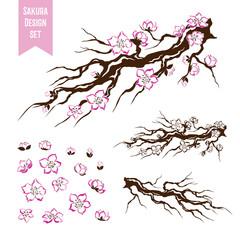 Sakura. Blossoming cherry tree branch.