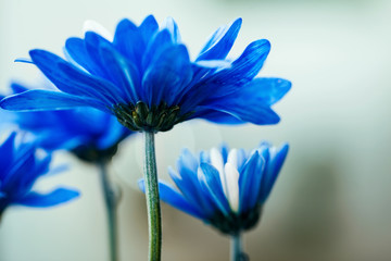 Closeup of blue flowers in a garden