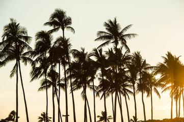ヤシの木と夕日,ハワイ,